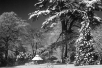Snow at West Dean