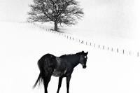 Winter 1968